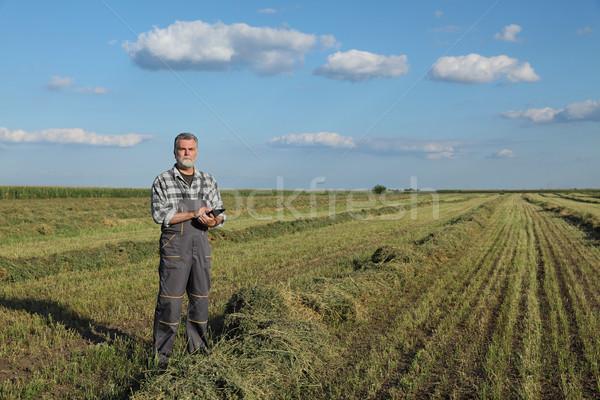 Farmer in clover  field after harvest Stock photo © simazoran