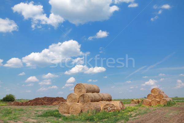 Landelijk stro oogst blauwe hemel Stockfoto © simazoran