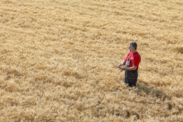 Stock fotó: Mezőgazdasági · jelenet · gazda · búzamező · búza · növény