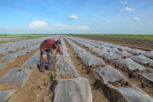 арбуза дыня области фермер Сток-фото © simazoran