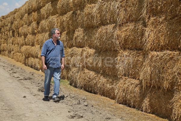 Stockfoto: Landbouwer · baal · stro · veld · onderzoeken · groot