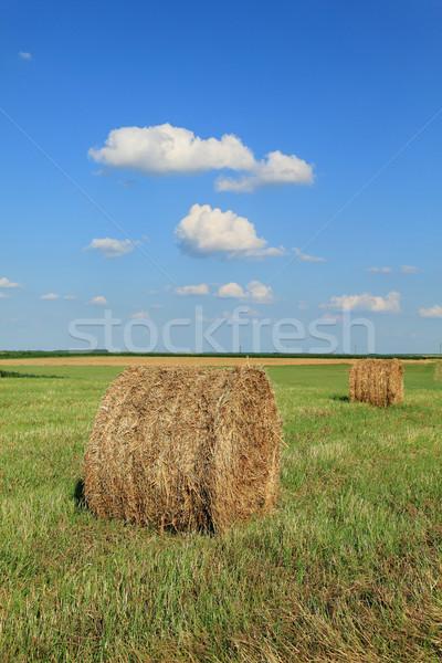 Bale fieno campo presto estate alimentare Foto d'archivio © simazoran