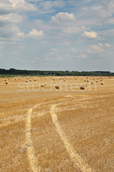 Wheat field after harvest with traces and rolled straw Stock photo © simazoran
