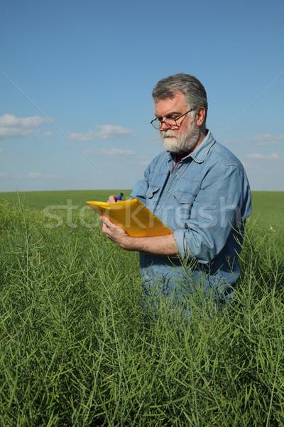 Farmer inspecting rapeseed crop in field Stock photo © simazoran