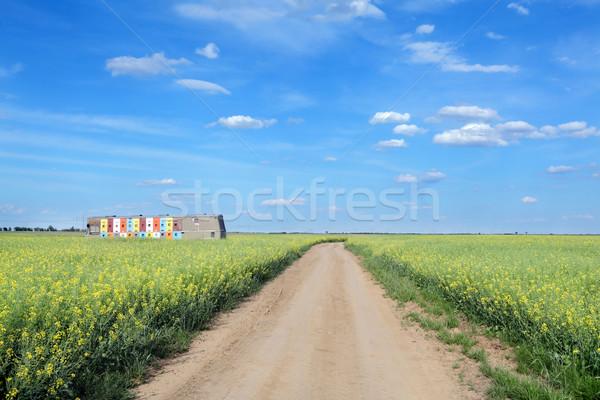 Agriculture, oil rape Stock photo © simazoran