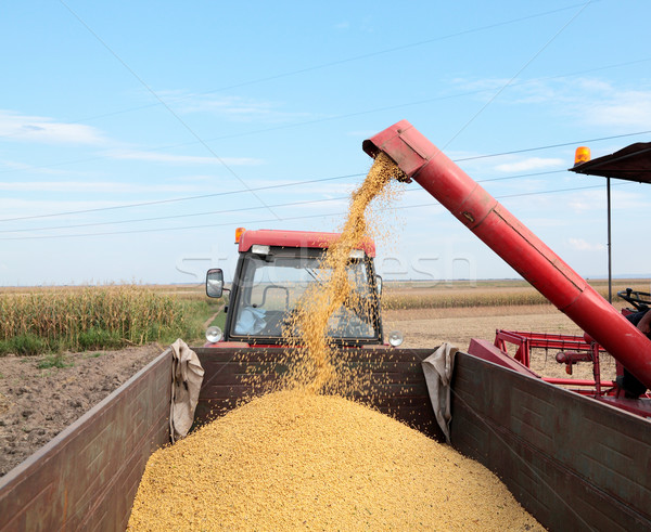Szójabab aratás gabona áramló szója bab Stock fotó © simazoran