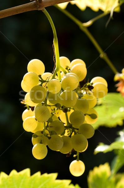 Foto stock: Foto · branco · uvas · vinha · natureza