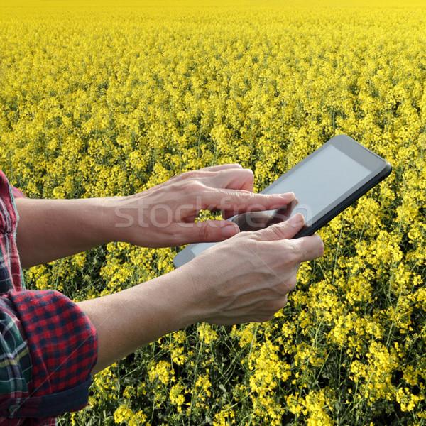 Farmer or agronomist inspecting blossoming rapeseed field Stock photo © simazoran