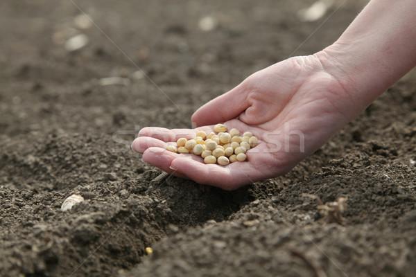 Landbouw menselijke hand zaaien tijd Stockfoto © simazoran