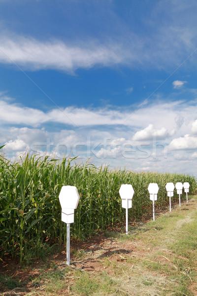 Agricultura experimental maíz campo temprano verano Foto stock © simazoran