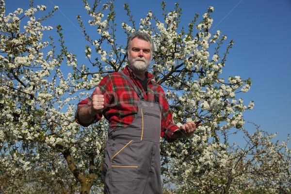 Landbouwer pruim boomgaard bomen Stockfoto © simazoran