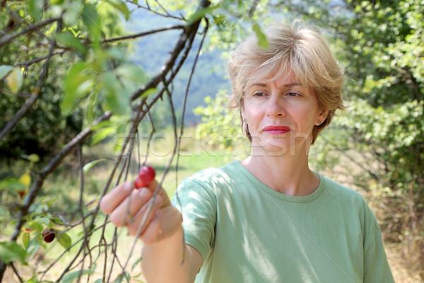 Cherry plum Stock photo © simazoran