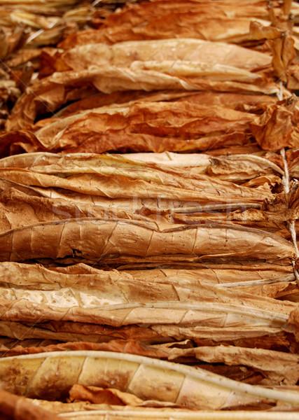 Tobacco Stock photo © simazoran
