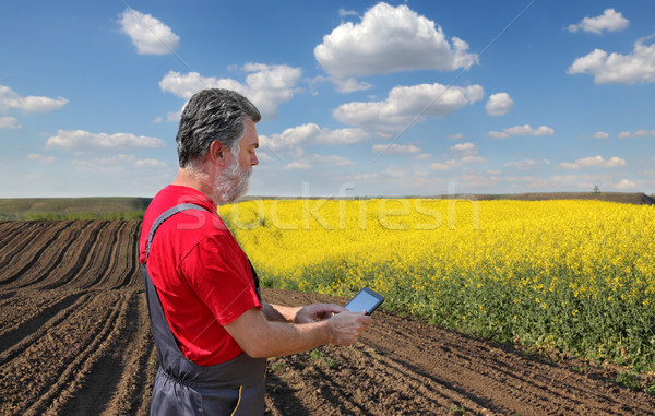Farmer or agronomist examine blossoming rapeseed field Stock photo © simazoran