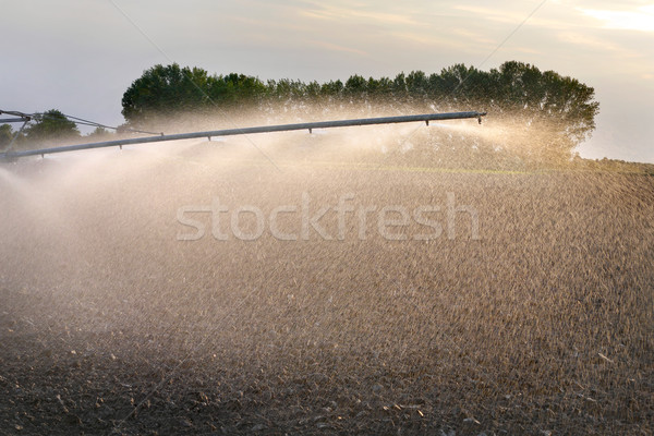 Field irrigation in spring Stock photo © simazoran