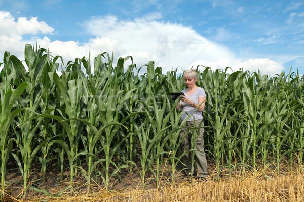 Agriculture, farmer or agronomist in corn field Stock photo © simazoran