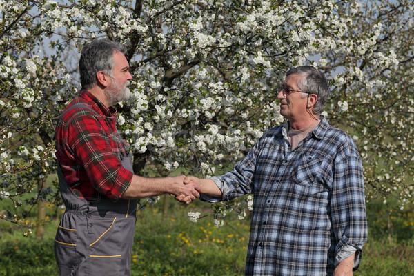 Landbouwer kers boomgaard handdruk Stockfoto © simazoran
