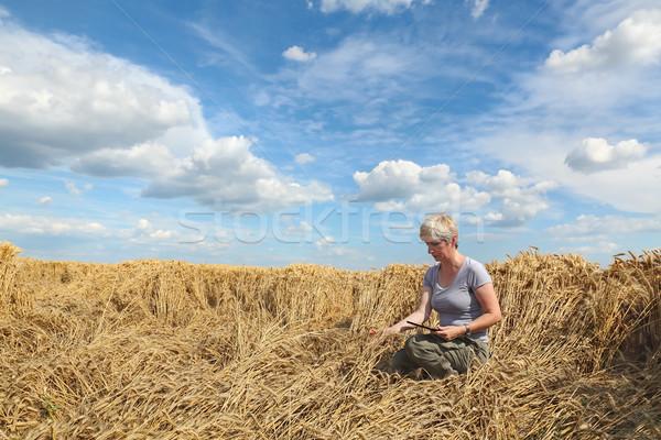 Farmer or agronomist inspect damaged wheat field Stock photo © simazoran