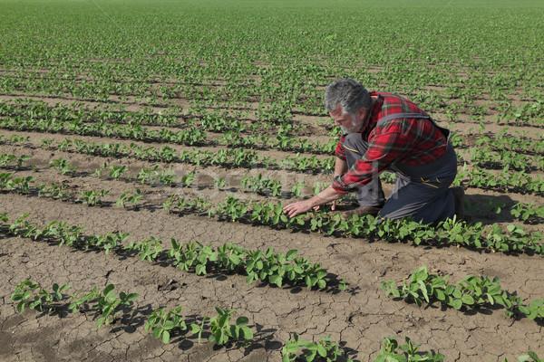 çiftçi soya fasulye bitki soya Stok fotoğraf © simazoran