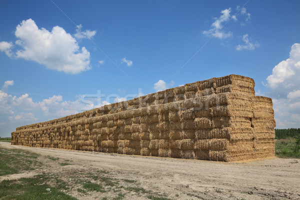Bale of packed straw in wheat field after harvest Stock photo © simazoran