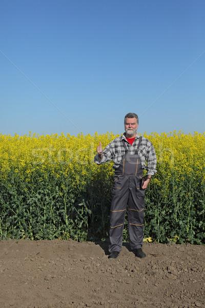 Farmer and blossoming rapeseed field Stock photo © simazoran