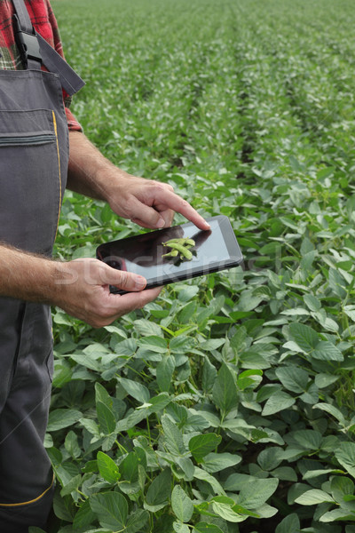 Farmer examining soy bean plants field Stock photo © simazoran
