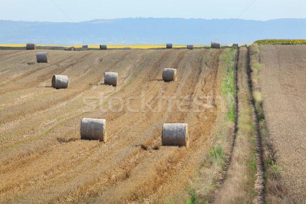 Récolte roulé paille bale très tôt Photo stock © simazoran