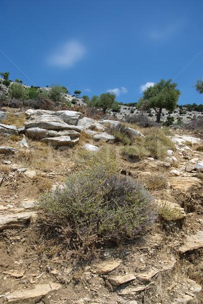 植生 岩 オリーブ 木 地中海 国 ストックフォト © simazoran