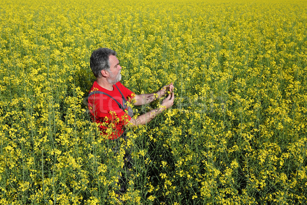 Farmer or agronomist in blossoming rapeseed field Stock photo © simazoran