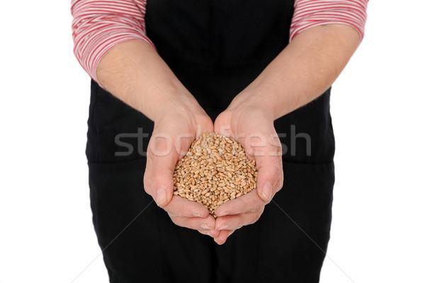農家 ホールド 小麦 手 ストックフォト © simazoran