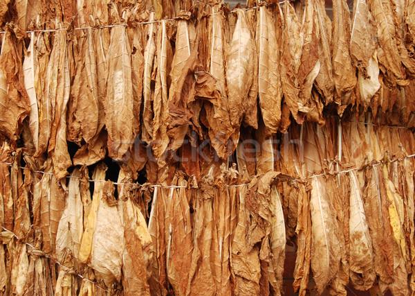 Tabak natuurlijke najaar natuur sigaret vallen Stockfoto © simazoran