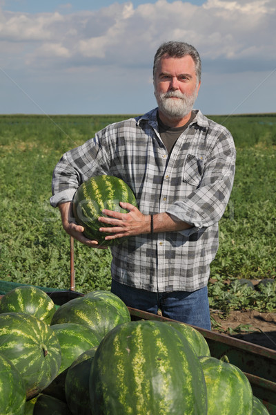 ストックフォト: 農家 · スイカ · 販売 · 1 · を見る