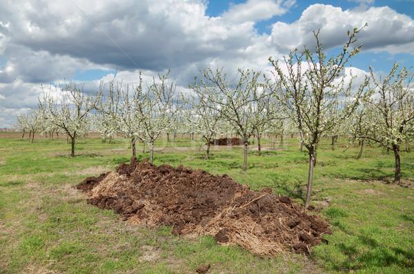 Mezőgazdaság műtrágya gyümölcsös halom virágzó szilva Stock fotó © simazoran