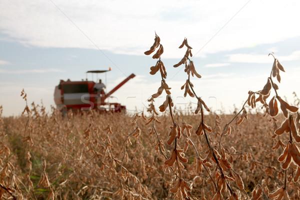 Agricultura cosecha soja frijol campo paisaje Foto stock © simazoran
