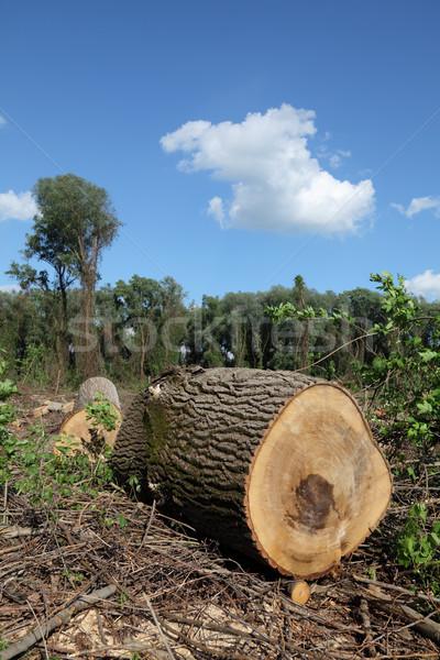 Legname industria grande albero primavera Foto d'archivio © simazoran