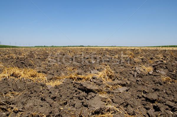 Eke föld nyár aratás búza égbolt Stock fotó © simazoran