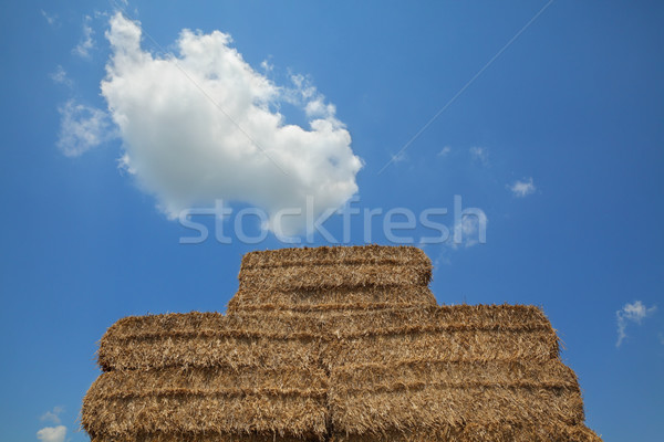Bale of packed straw after harvest Stock photo © simazoran