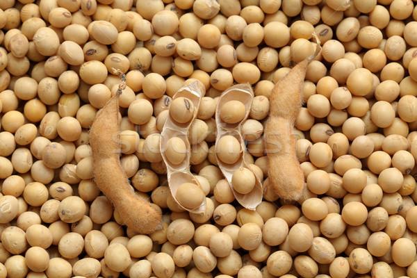 Mezőgazdaság szójabab aratás közelkép fotó szója Stock fotó © simazoran