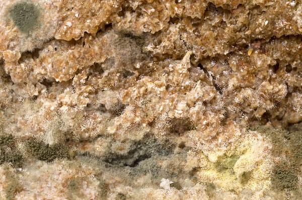 Extreme natuur groene brood Stockfoto © simazoran