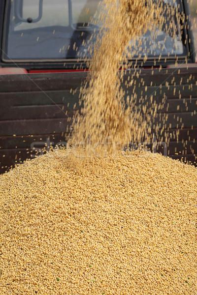 Soy bean harvest, crop pouring Stock photo © simazoran
