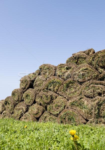 Stock photo: Grass