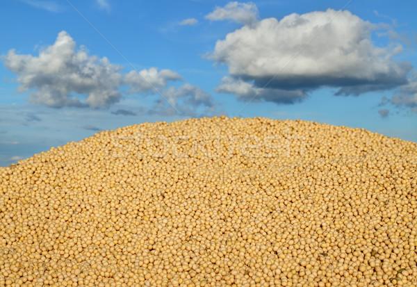 Mezőgazdaság szójabab aratás halom szója bab Stock fotó © simazoran