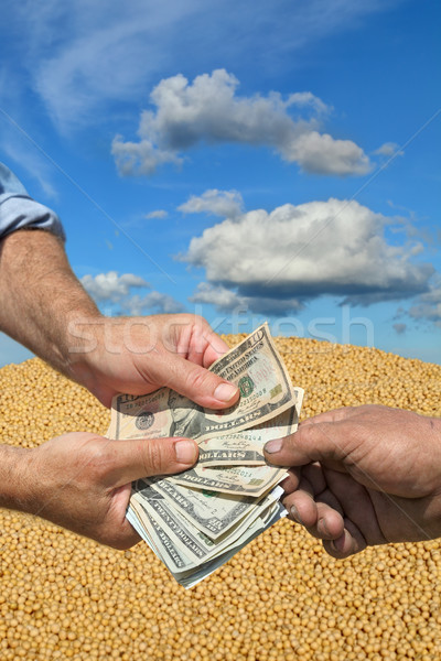 Agricultural concept, soybean crop and money in hands Stock photo © simazoran