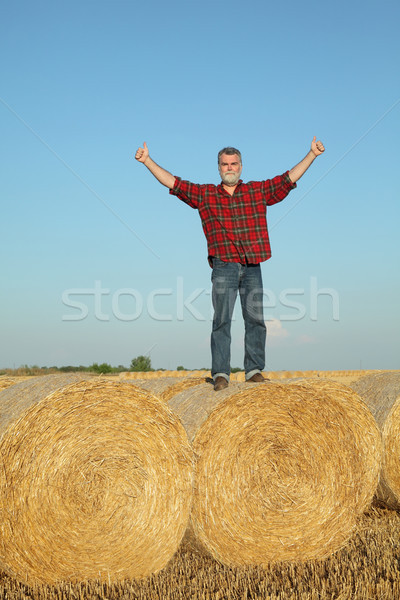Farmer examining wheat field after harvest and gesturing Stock photo © simazoran