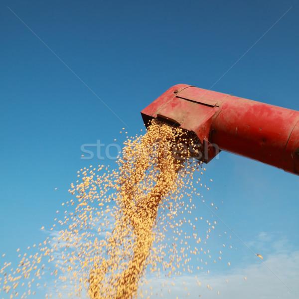 Szójabab gabona áramló szója bab étel Stock fotó © simazoran