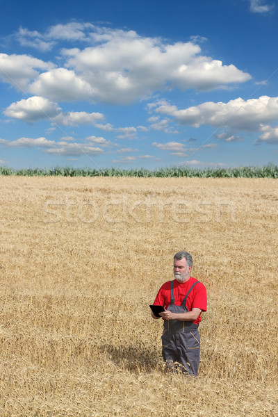 Agricultural scene, farmer or agronomist inspect wheat field Stock photo © simazoran