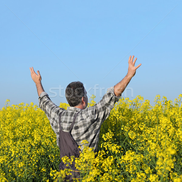 Farmer gesturing in blossoming rapeseed field Stock photo © simazoran