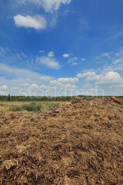 Natural fertilizer, cow dung in field Stock photo © simazoran