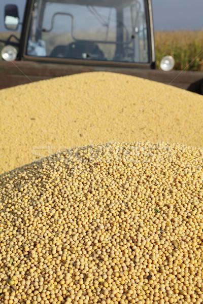 Szójabab aratás traktor szója bab aratás Stock fotó © simazoran