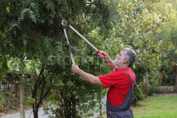 Tuinieren activiteit landscaping volwassen mannen gesneden Stockfoto © simazoran